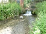Heron Stream feeds into the Wendover Arm at Wendover.